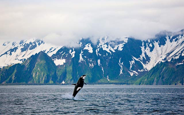 Welcome to Kenai Fjords National Park