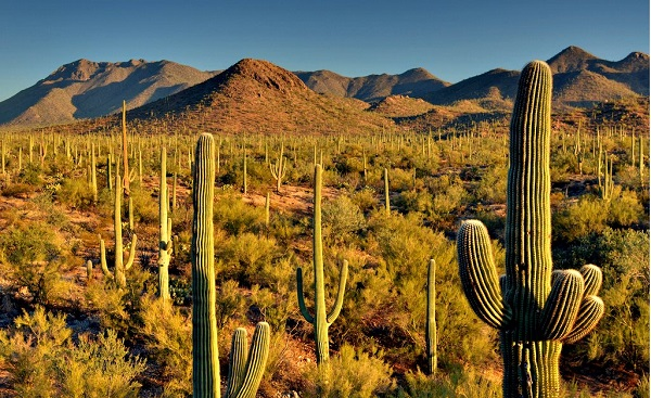 Welcome to Saguaro National Park